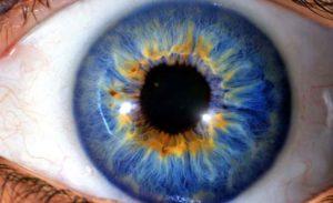 taller de iridologia