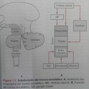 funcionamiento de la Biomecánica