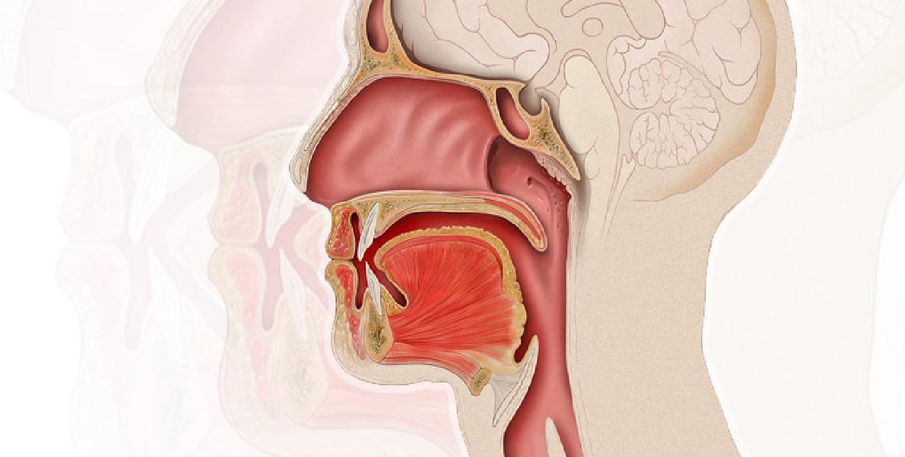 ¿De qué trata la especialidad en otorrinolaringología y para qué sirve?