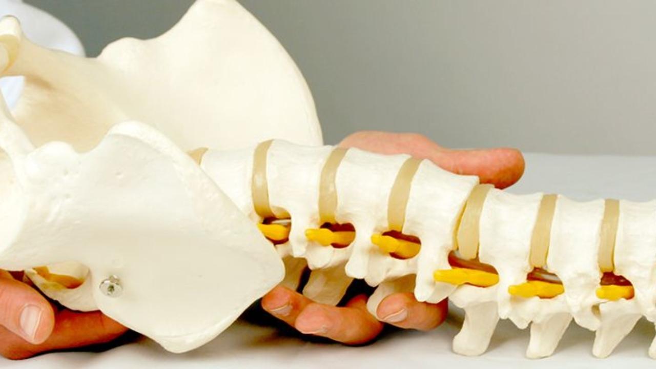 La columna vertebral y sus zonas de trabajo en quiropráctica